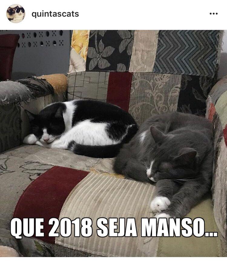 feliz 2018 gatos